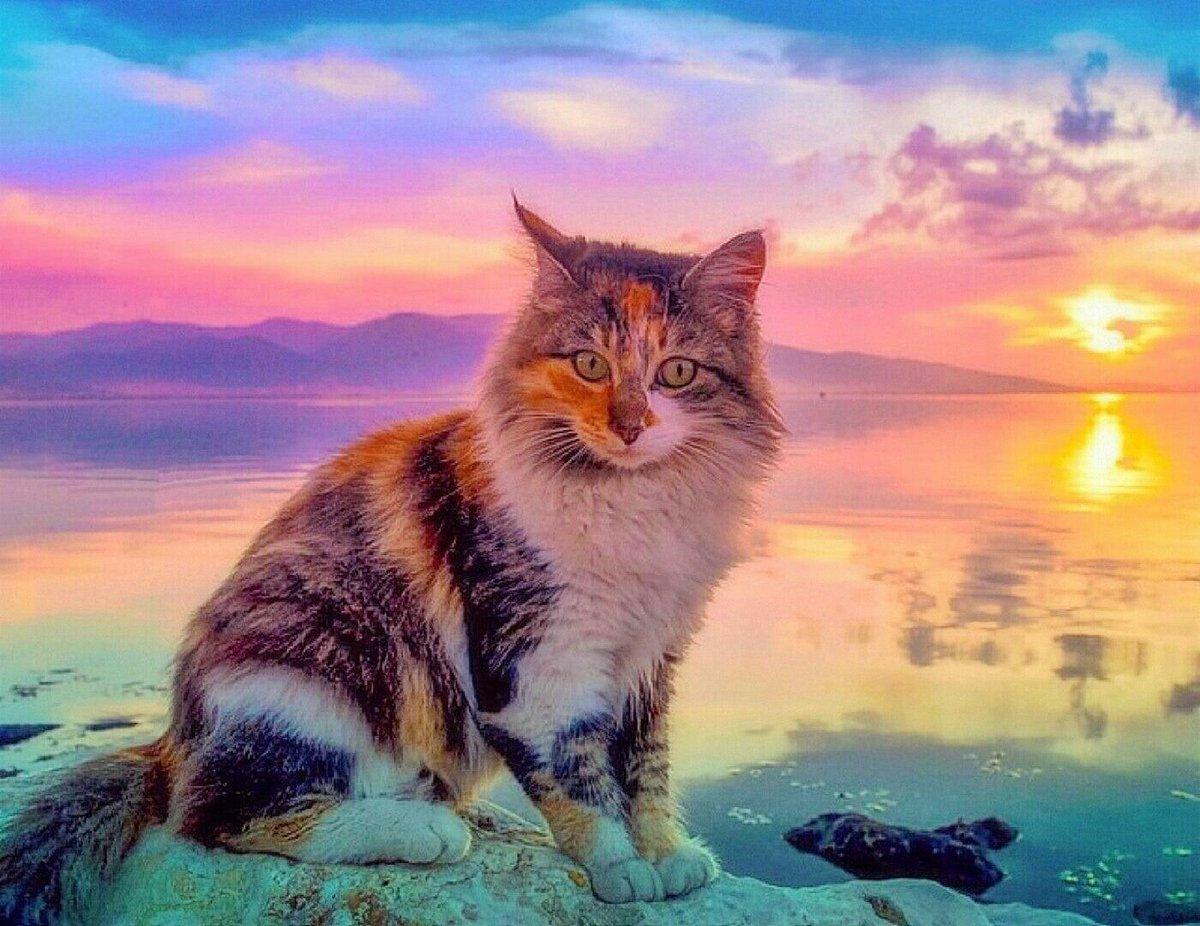 Картинки котята на закате