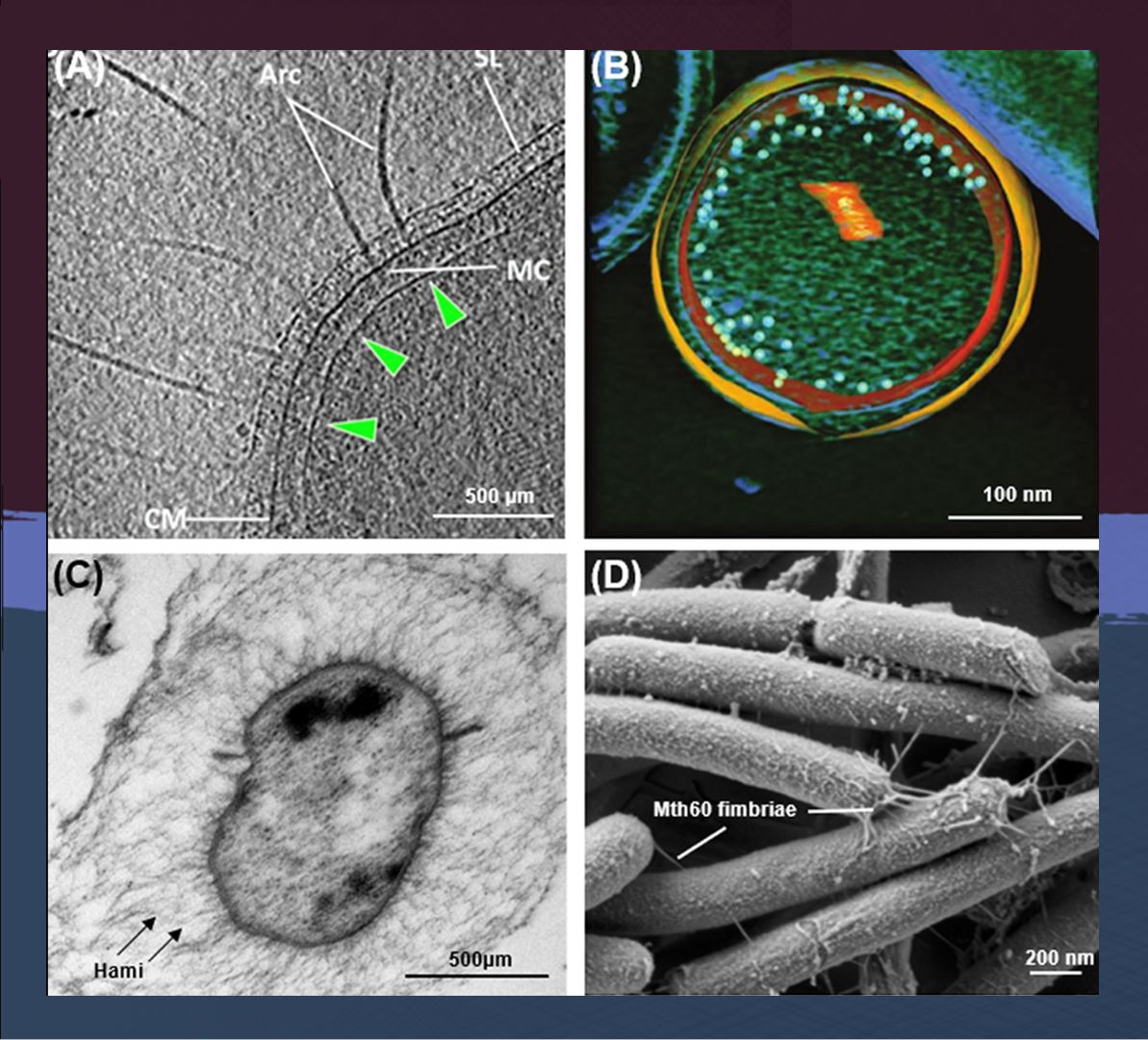 Prokaryotes Hashtag On Twitter Review Prokaryotic Cells It Features 9 Reviews The Latest Research Into Thethirddomainoflife Http Bitly Archaea2018 Microbiology Femsjournals Image