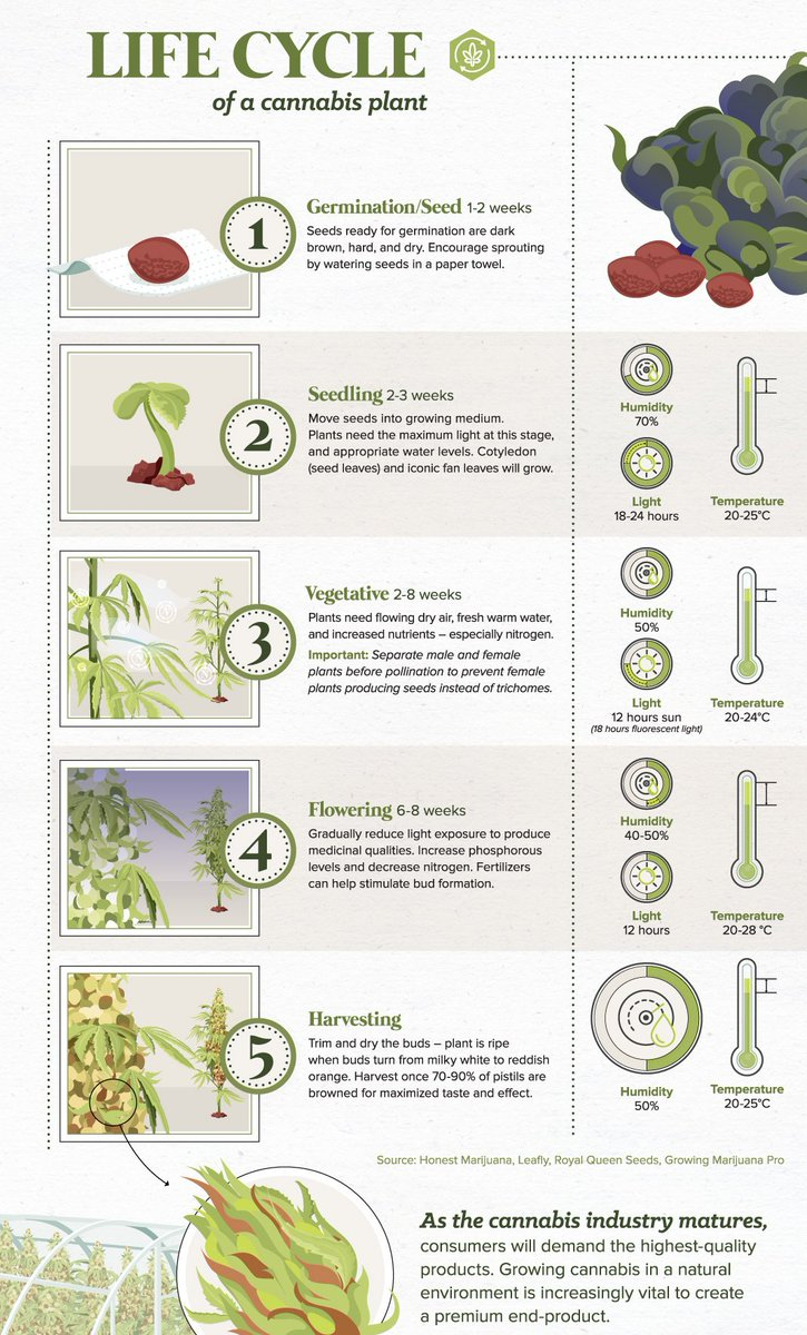 Visual Capitalist On Twitter The Anatomy Of A Cannabis Plant And