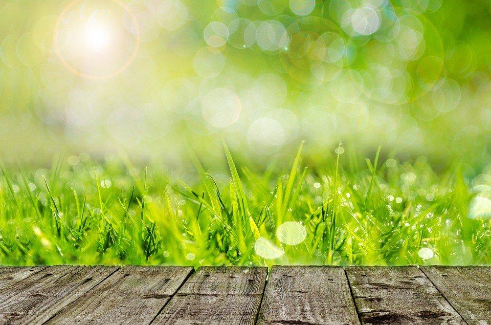 Paper Burning On Summer Grass Outdoors Stock Drtuber 1