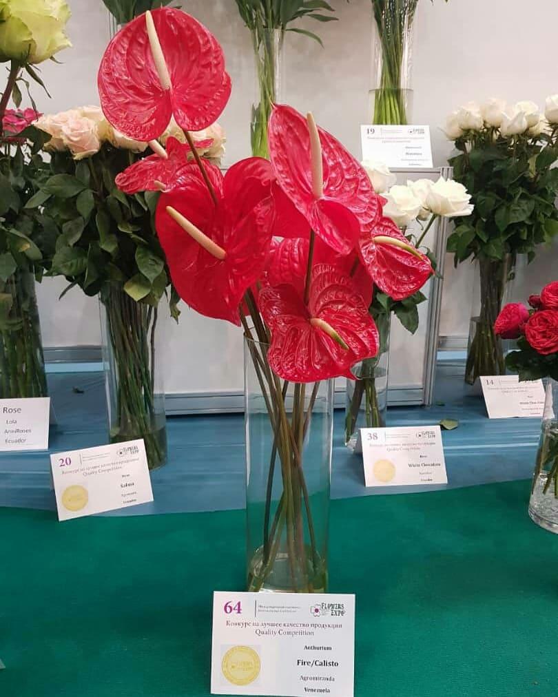 Venezuela recibió premio internacional de la flor de mejor calidad en Feria Internacional de Moscu Dm56DC9X4AA7dvB