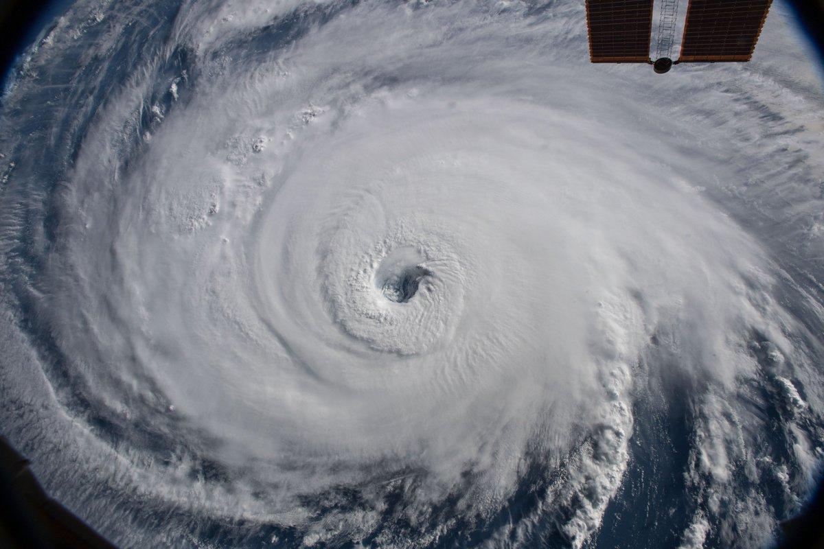 Cyclone forrest