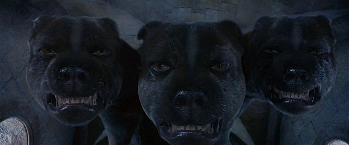 Harry Potter World On Twitter 12 September 1991 Harry Ron Hermione And Neville Encounter Fluffy The Three Headed Dog Now If You Two Don T Mind I M Going To Bed Before Either Of You