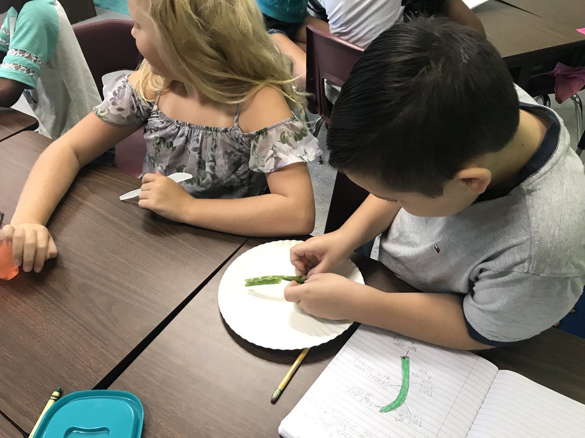 4th grade scientists learning about the properties of seeds. @kids_inspire @JCPSScience @JCPSKY @dporterJCPS