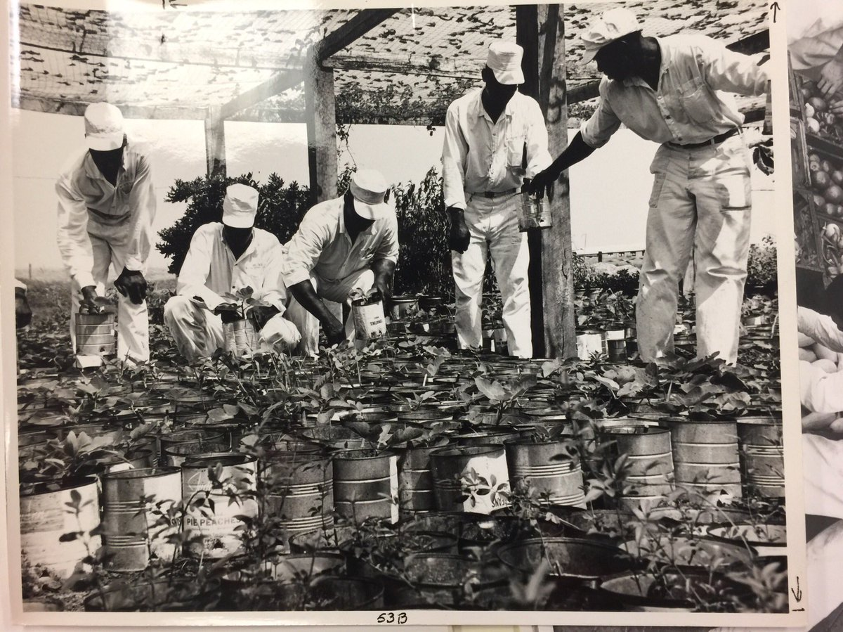 the flaws of prison labor essay Tokugawa japan: an introductory essay by marcia yonemoto, university of colorado at boulder sir george sansom's history of japan was first published in.