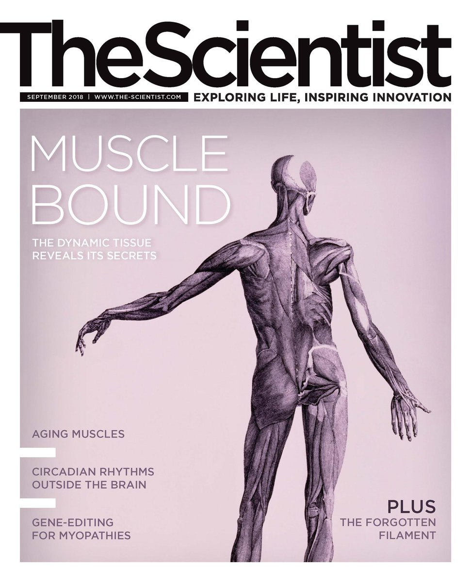 Capucine Trollet On Twitter Read Our Article On Muscle Aging