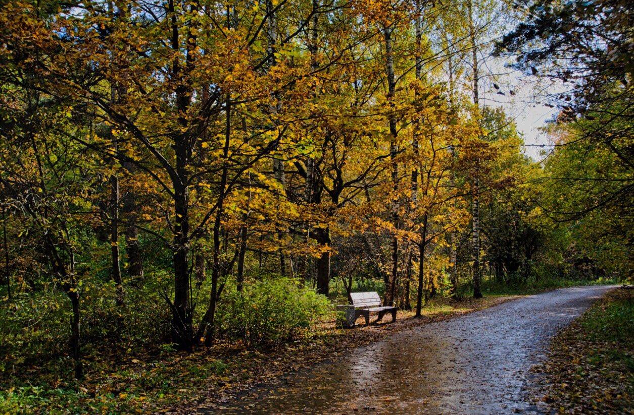 Бутовский лесопарк фото