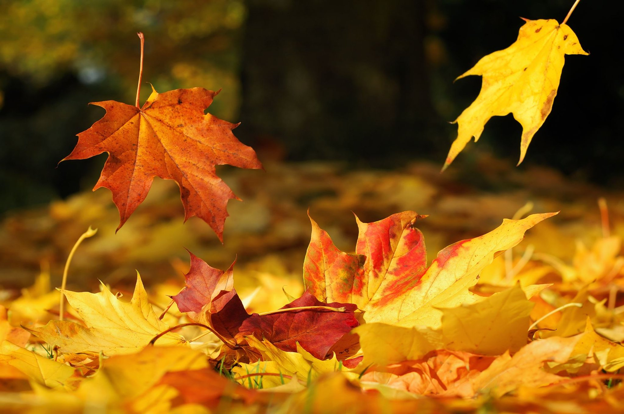 будто намекают картинка листья кружиться что меня