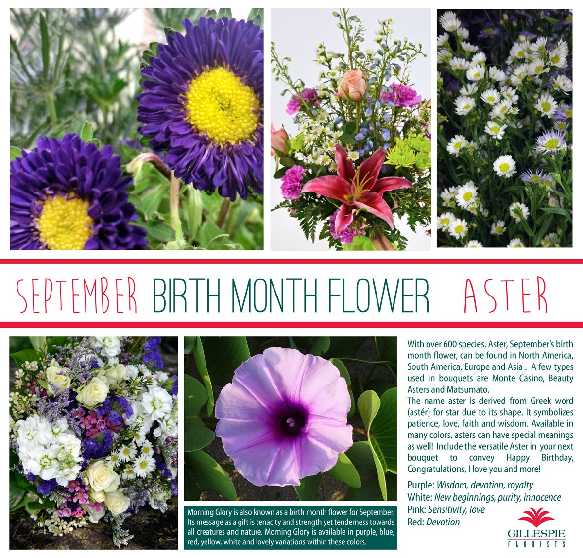 Ask for aster in birthday bouquets this month as it's the birth month flower for September! Got to love the brilliant colors in these fancy flowers!