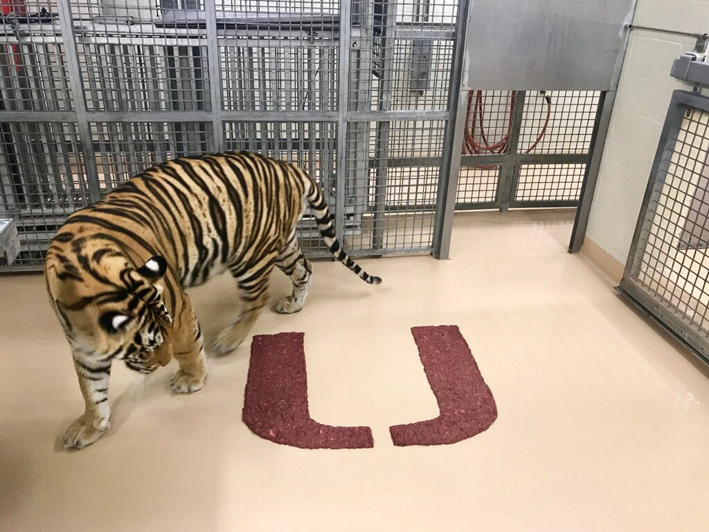 So, Tigers, where should I start? @lsufootball #LSU