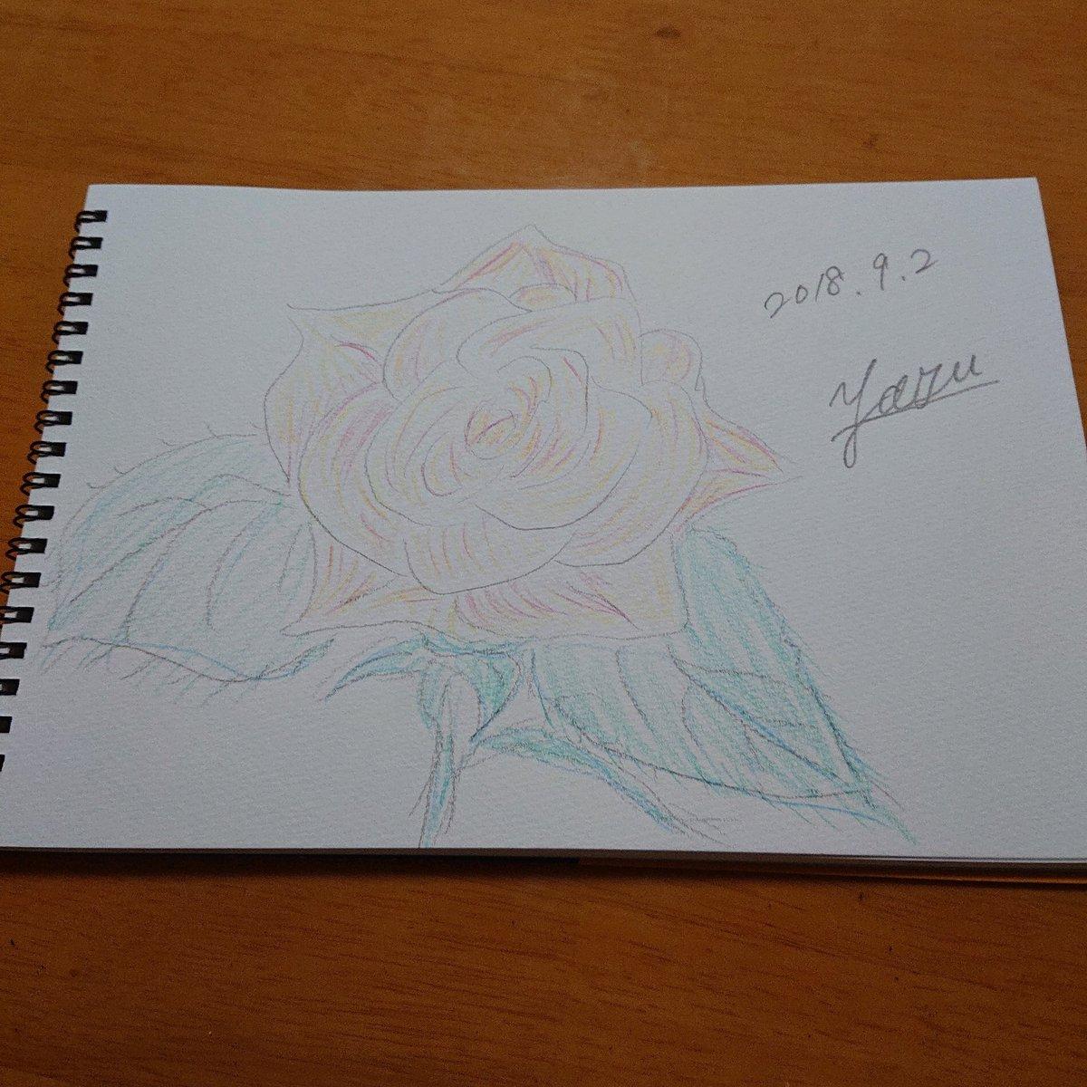"""test ツイッターメディア - 久しぶりに絵を描いた(^-^) 色鉛筆は、 #Seria の #にほんの色鉛筆 を使用。 淡い色合いが大好き?(´?`?) サインのスペルの書き方が変なのは・・・相変わらず(´-?-`;) #薔薇 大好き""""?""""?(*///?///*)?""""?"""" https://t.co/Qwx9CvDrdL"""