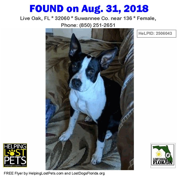 Lost Dogs Florida on Twitter: