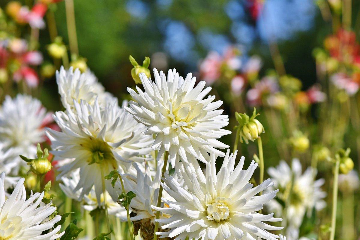 World Love Flowers On Twitter The Beautiful Taj Mahal Garden Is