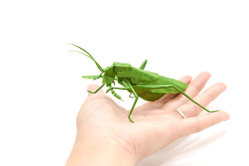 How to Make an Origami Grasshopper Step by Step Instructions ... | 683x1024