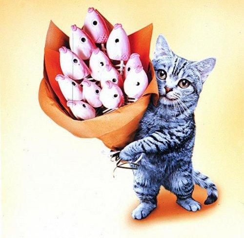 Угарные картинки с днем рождения подруге с котами