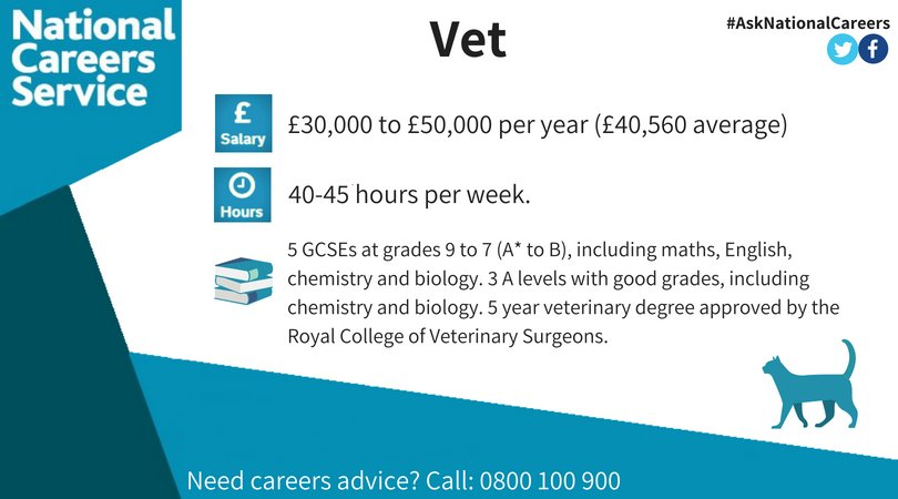National Careers On Twitter Job Profile Of The Week September Celebrates Happycatmonth Our Profile This Week Is Dedicated To Veterinarians Find Out More About This Career By Calling 0800 100 900