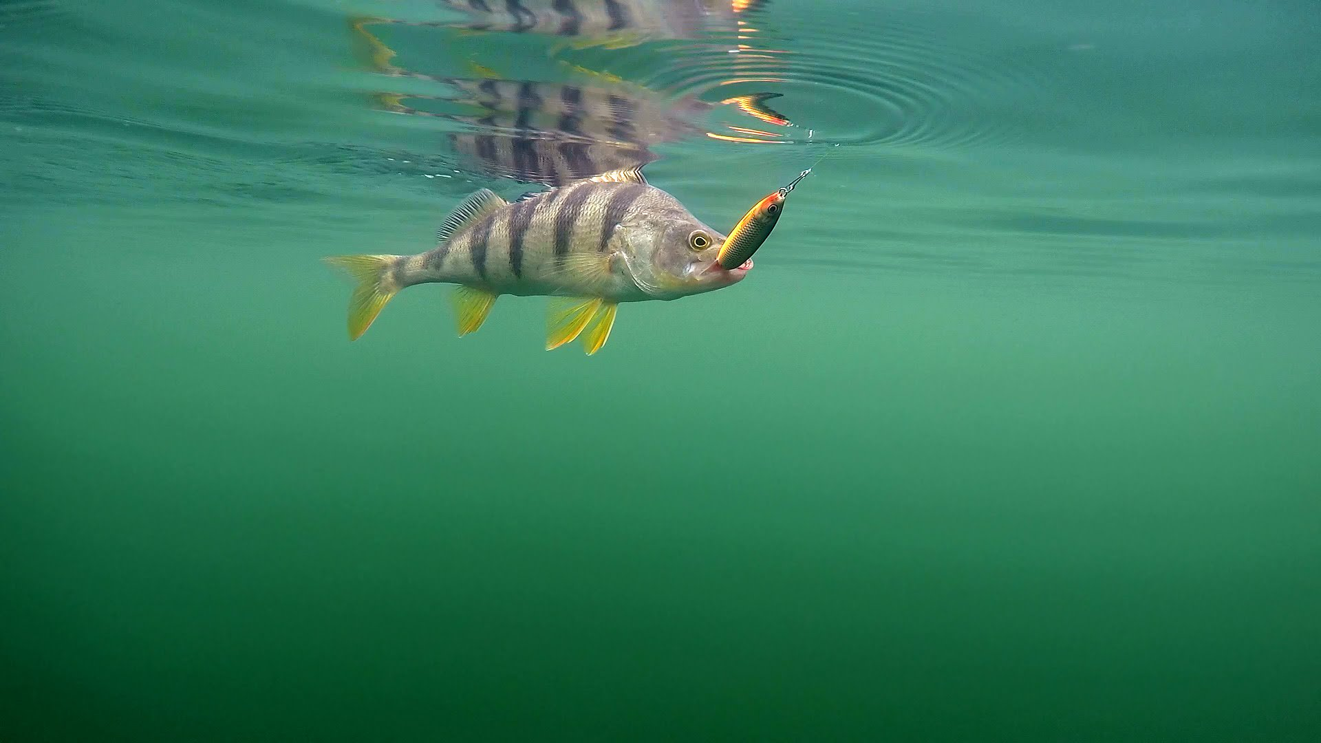 рыболовные картинки на рабочий таланта красоты