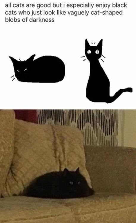 Funny Memes On Twitter Black Cats Memes Meme