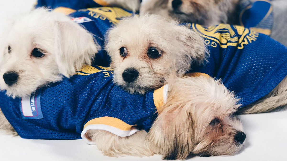 Are you hanging out with your doggo on your day off?  More #DubNation good dogs» https://t.co/lUWDk9xUCP