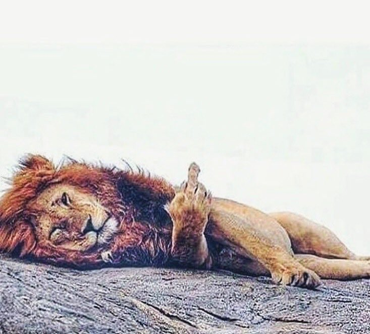 Картинки с надписью со львами, тебя люблю