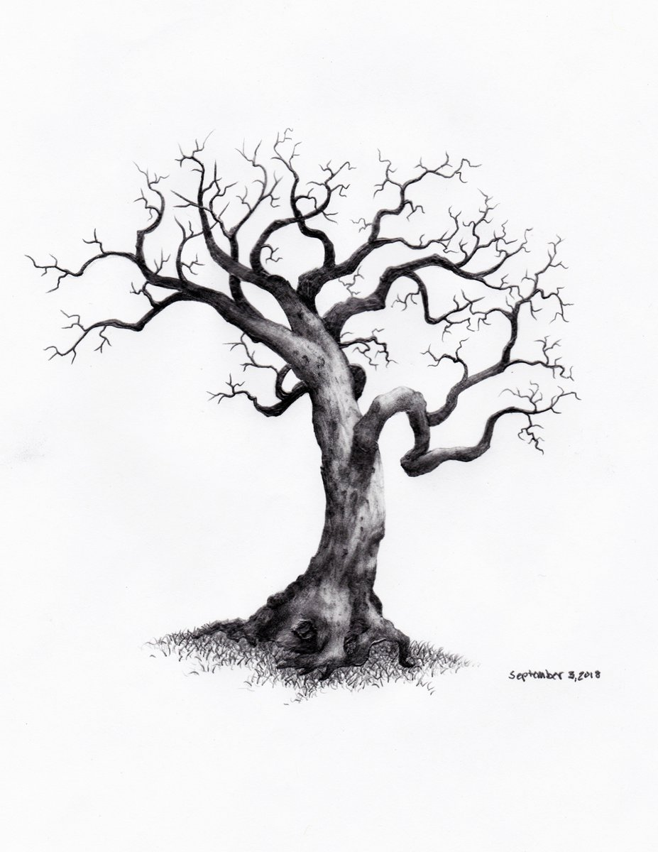 Sketch Artistic Tree Drawing