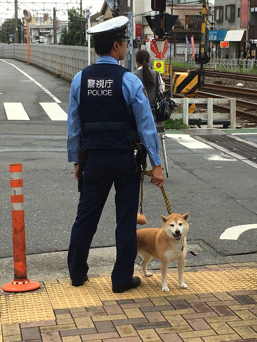 [犬]警視庁がくっそ可愛い警察犬を導入してる…。[2018年9月4日]