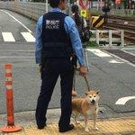 こんなに可愛い警察犬いるの仕事できなくても許すわ