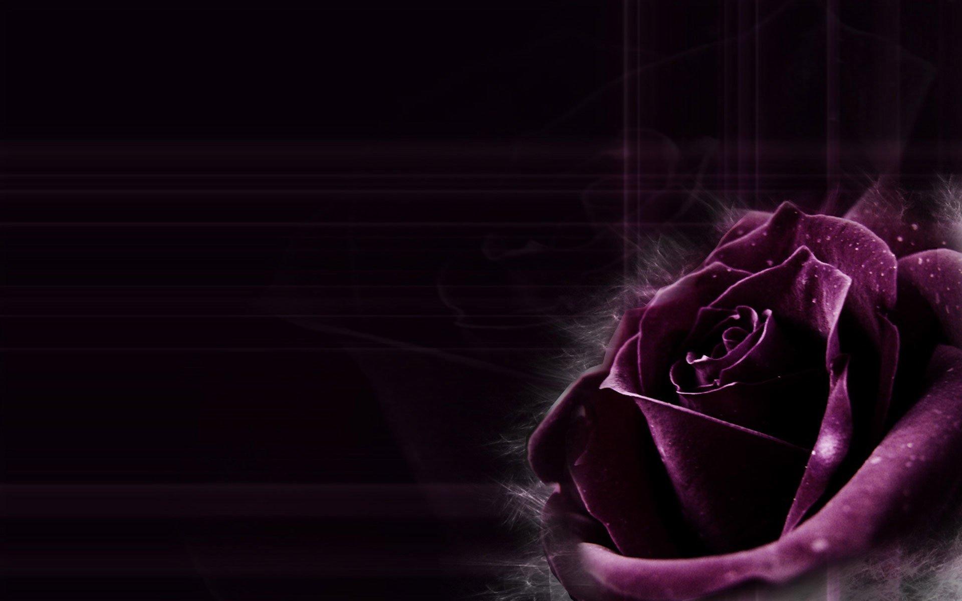 Открытки, картинки фиолетовые цветы на черном фоне