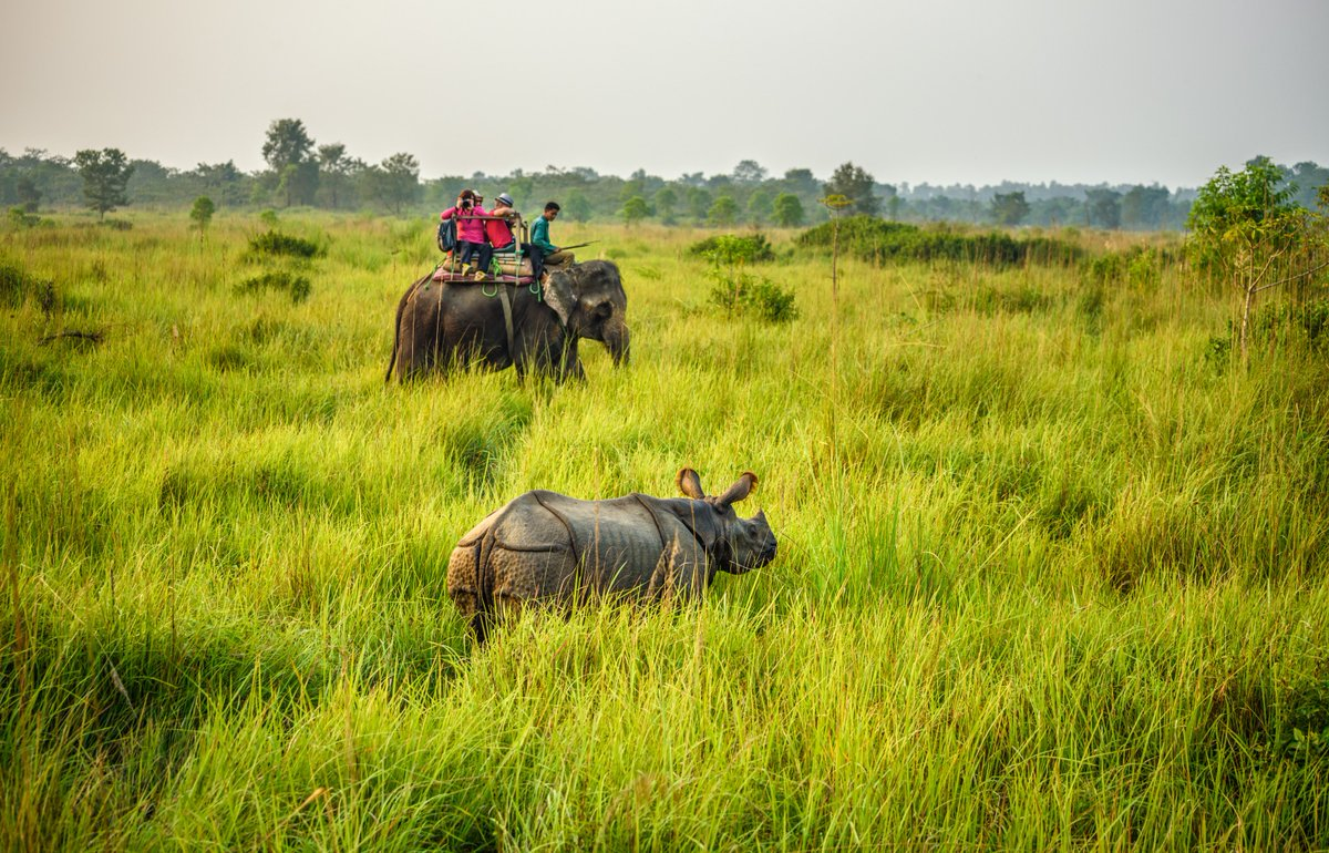 #OnehornedRhinoceros  is a prized possession of #India  #ConservationCommunity has worked really hard to save this species, one of the key partners is @wti_org_india  #EndangeredSpecies @deespeak @action4ifaw @BBCEarth @incredibleindia @moefcc @vivek4wild @SanctuaryAsia