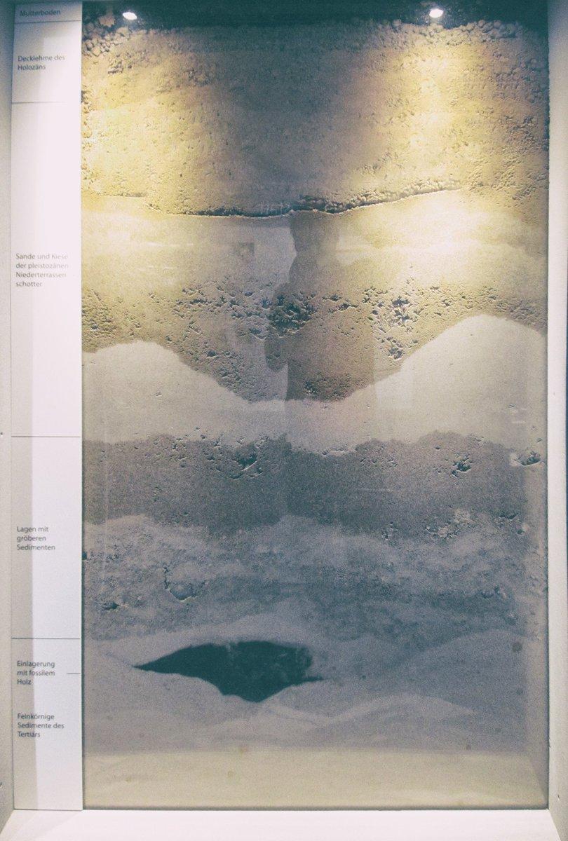 Guía de campo anfibios y