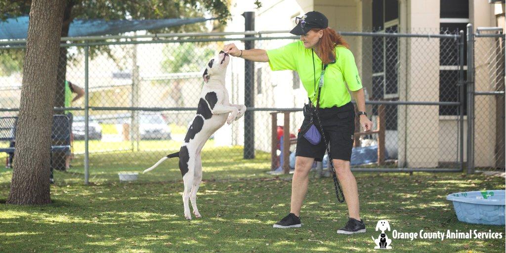 Orange County Animal Services on Twitter: