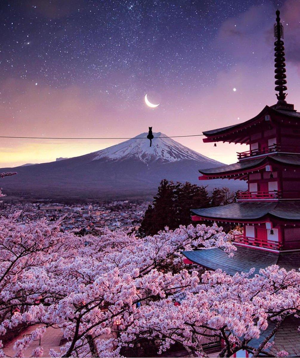 Fiori Japan.Optatravel Twitterren Fiori Di Ciliegio In Giappone