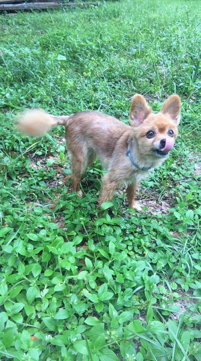 dog that looks like a fox - 671×1200