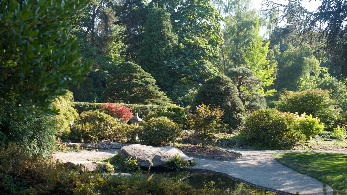 see you this saturday sep 8 9 100 pm at kubota garden kubotagarden seattle japanesegarden seattlegarden gardening plantsale southseattle garden - Kubota Garden