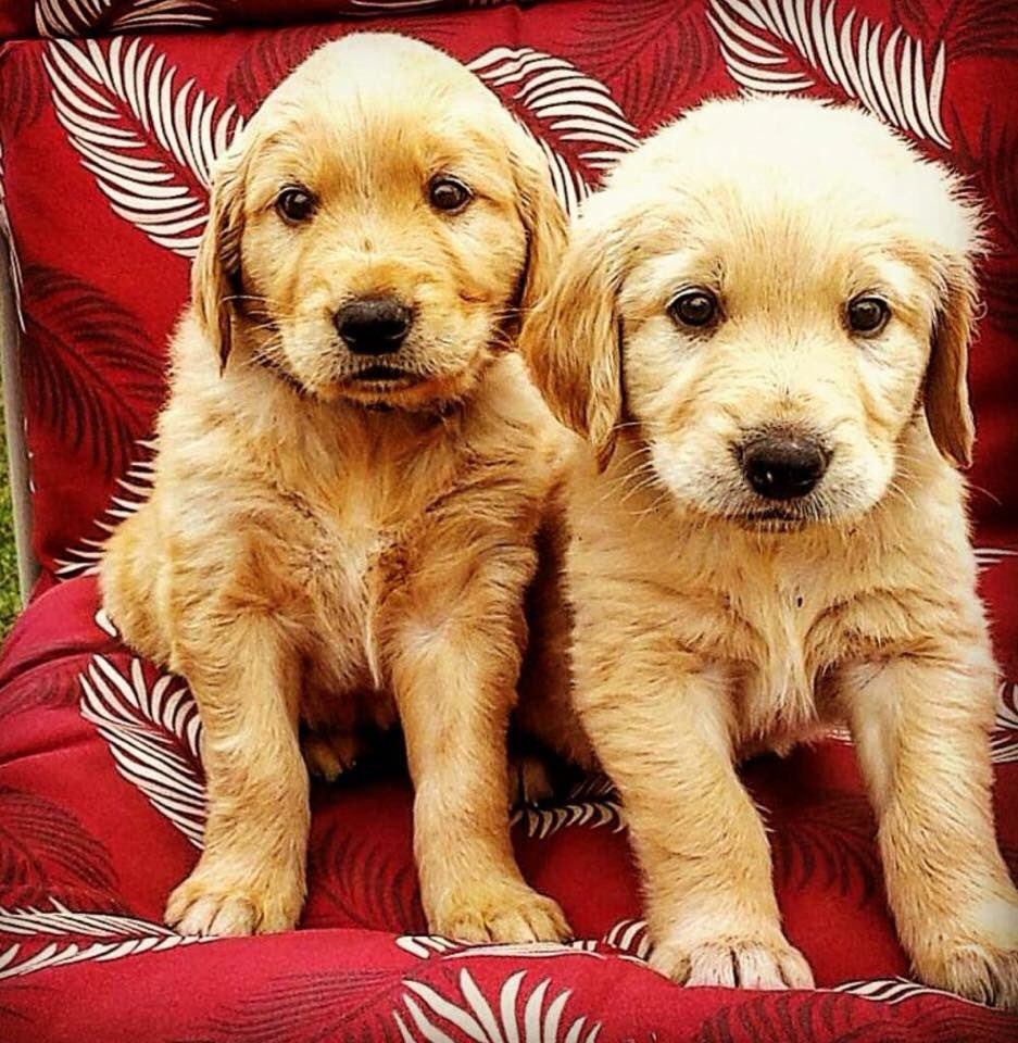 Ive Pet That Dog On Twitter I Pet Otto And Auggie They Are 2