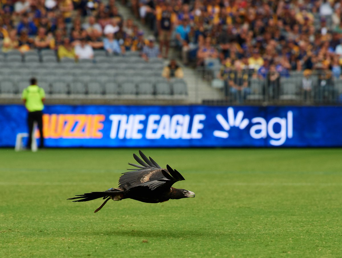 9680fdcc805 West Coast Eagles on Twitter: