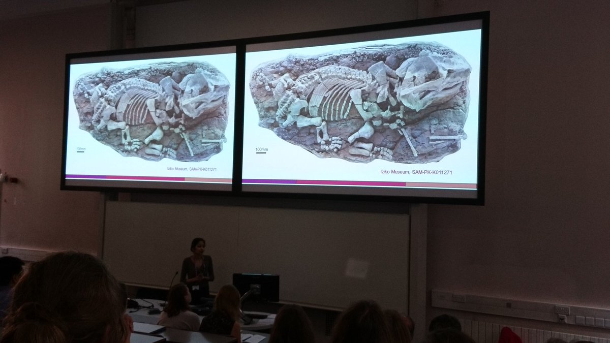 Nice talk by @iyra_emm on Endothiodon, a Late Permian dicynodont from the Karoo Basin of South Africa #SVPCA2018 <br>http://pic.twitter.com/Op9vetRsHy