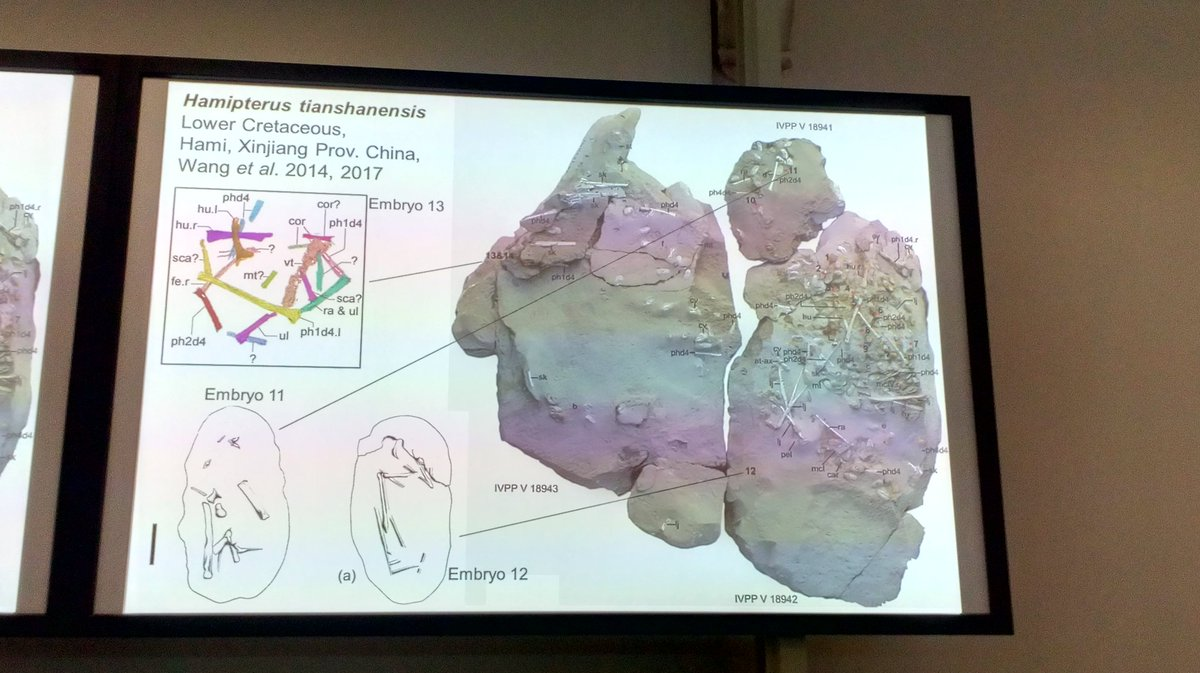Wow. Imagine finding a clutch of 300 #Pterosaur eggs! (Yes, 300). But could the hatchlings fly?..... #SVPCA2018 <br>http://pic.twitter.com/3sFPbFiLE6
