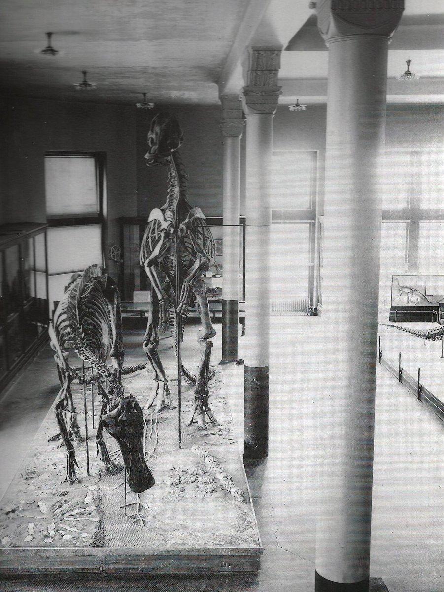 RT @Bhmllr: 110 years of Thespesius/Trachodon/Anatosaurus/Anatotitan/Edmontosaurus at AMNH #FossilFriday https://t.co/0BUGMPQSpo