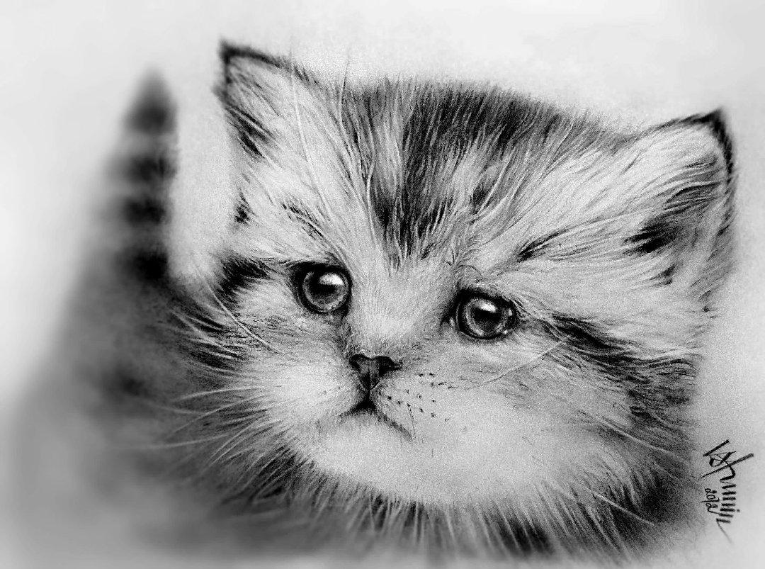 Самые милые картинки животных карандашом