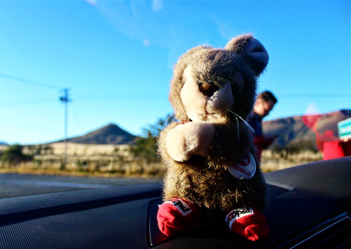 Even @TheUnogwaja mascot wears #ShoOops!   Happy @redsockfriday!  We are #BetterTogether https://t.co/iE1eX6x3R9