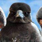 #AFLEaglesDees Twitter Photo