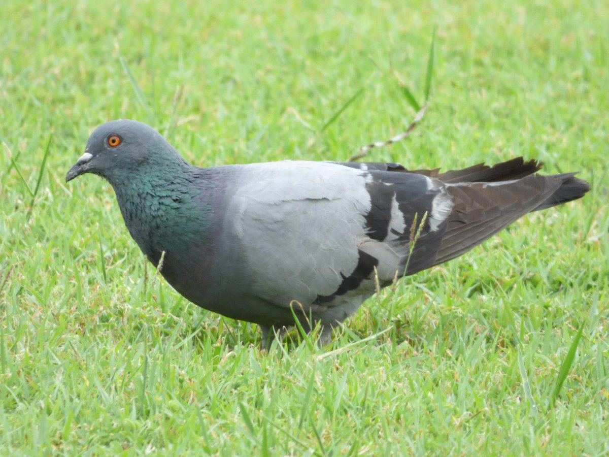 Uzivatel James Dauris Na Twitteru Every Bird Deserves Its