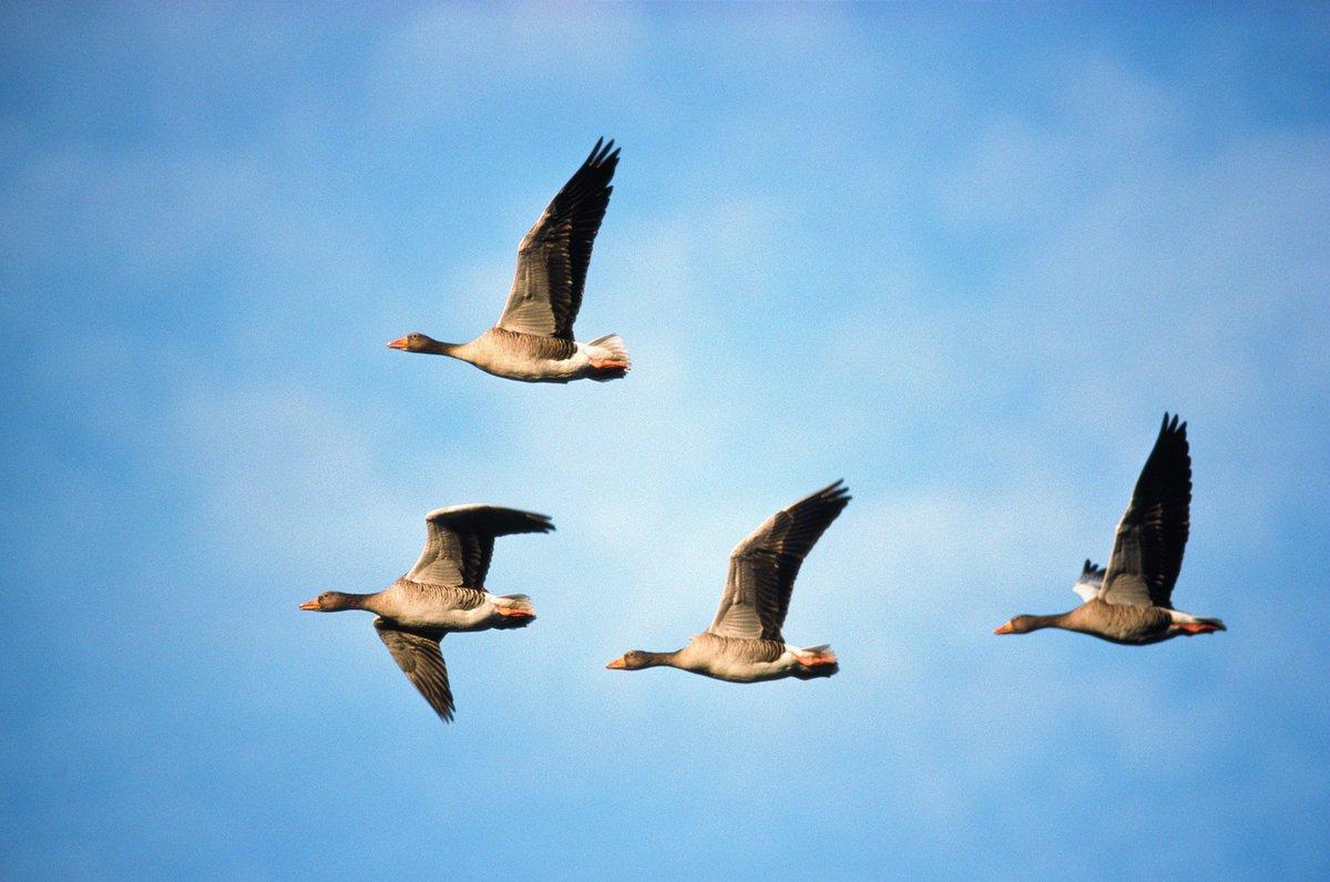 доступен список виды перелетающих птиц фото телефоне нет функции