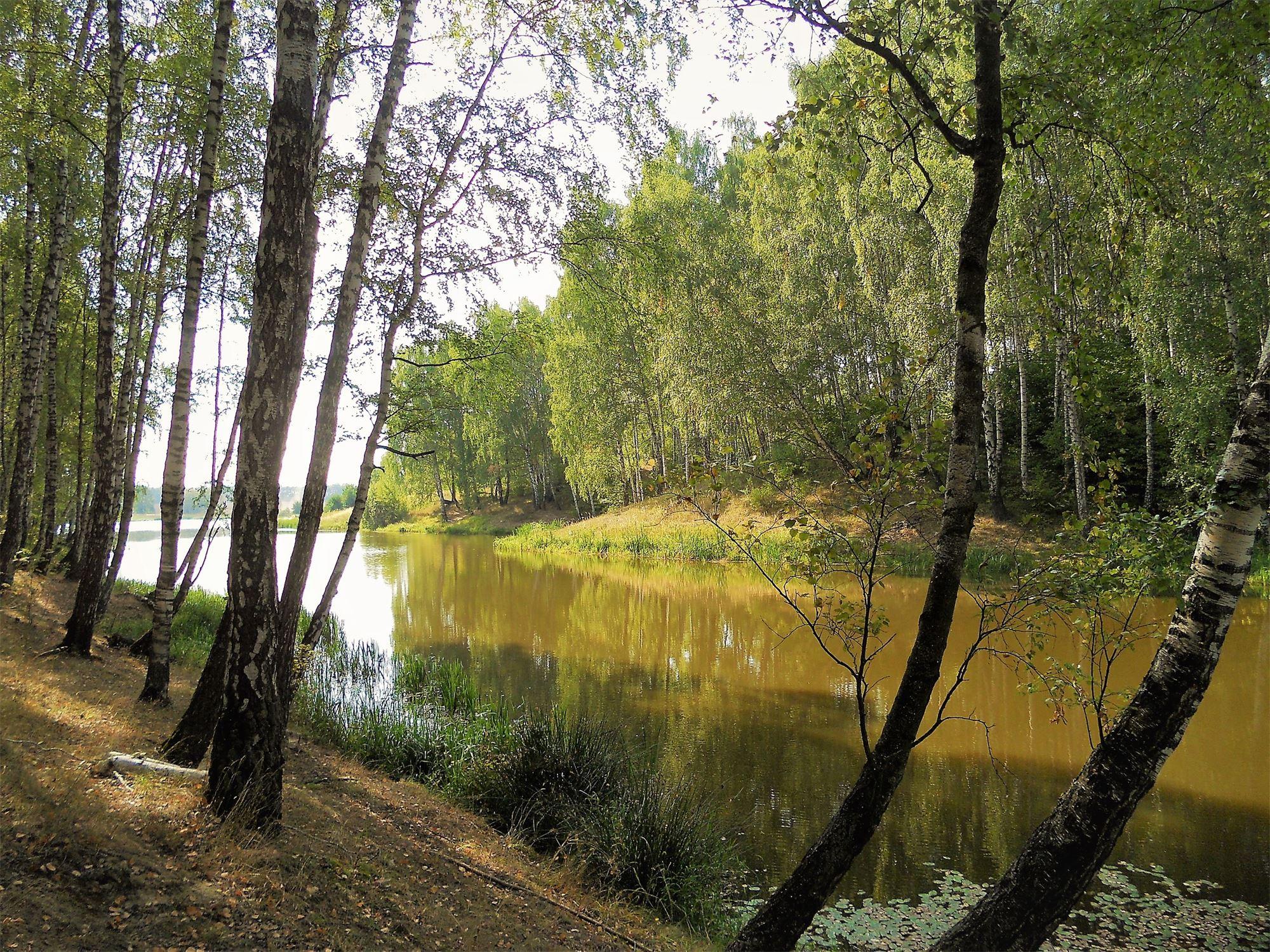 декоративные рязанские пейзажи фото резьбонарезными станками