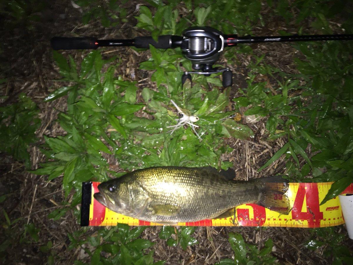 ホーム37と35の二本! 巻物で釣れる季節になりました! #OSP #ハイピッチャー #ガストネード #柴山沼