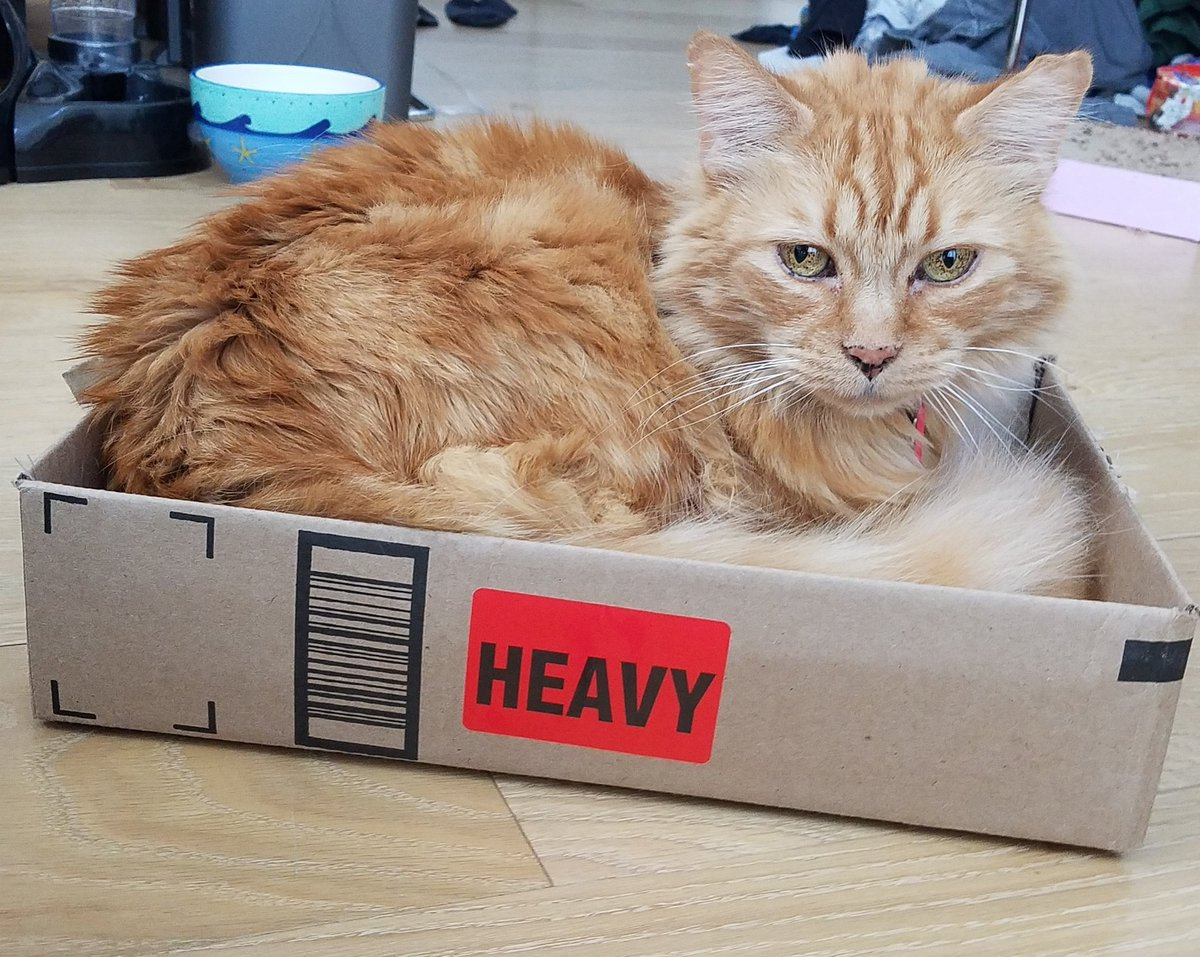 Lion got two new boxes recently 🦁