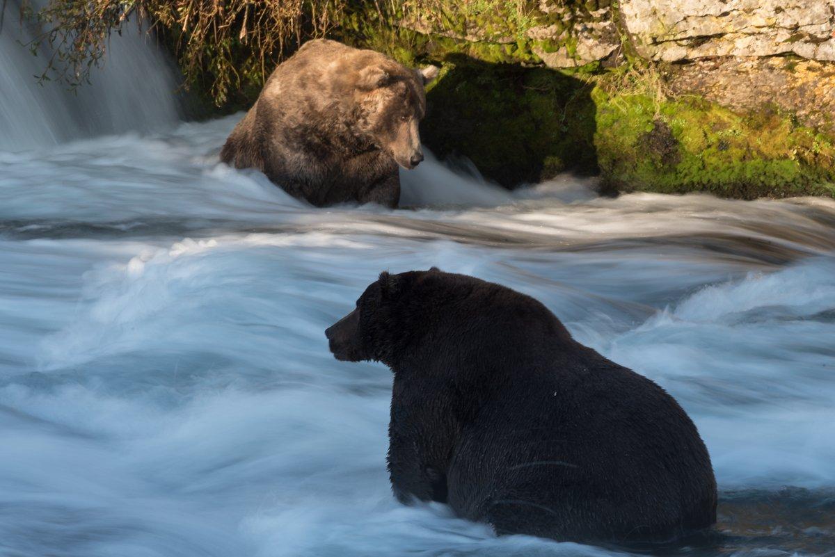 Alaska's badass bears: A battle to reclaim the river's throne
