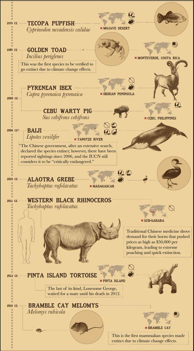 "extinct animals on twitter: ""here is a list of 36 extinct animals"