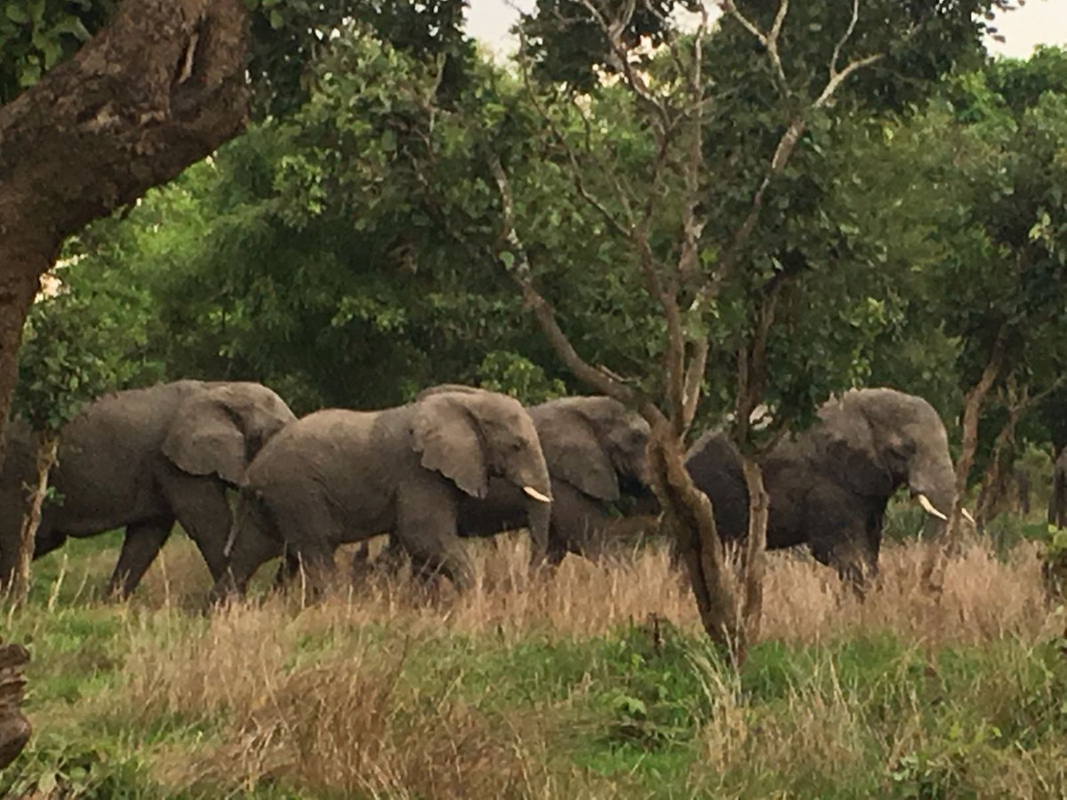""".@radio3_rne El elefante tiene que ver con la abeja y con el agua y con el consumo de plástico y con los árboles y con las migraciones climáticas… """"Tenemos que cambiar nuestro pacto con la naturaleza"""", dice #JoséMaríaGalán.  #StopDefaunaciónRadio3 https://t.co/j6ymrM706a"""